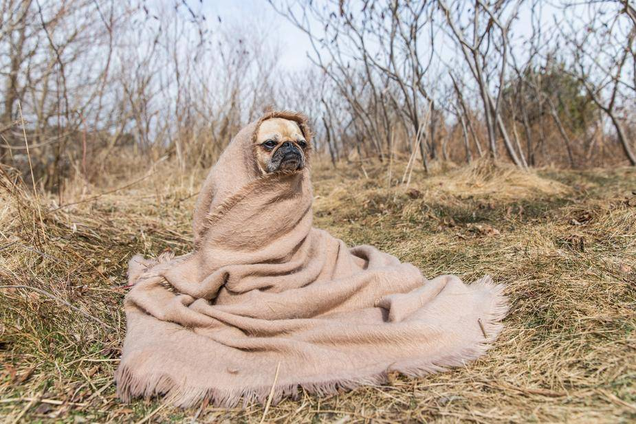 Which other of the Shopify free tools is going let you come across this absolute gem? Getting the feeling that this pug might be able to tell your fortune too….